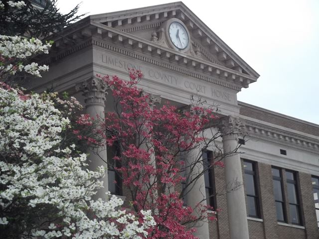 The Square with budding trees and a view of the Limestone County Court House